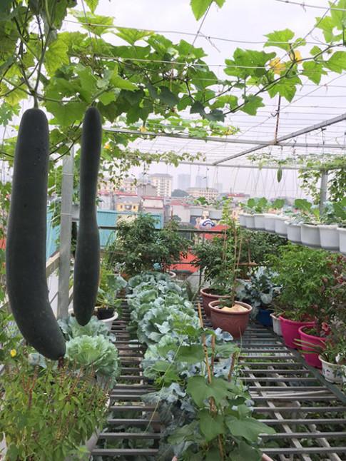 Mẹ 7x thiết kế vườn treo sân thượng đủ rau ăn cho cả nhà
