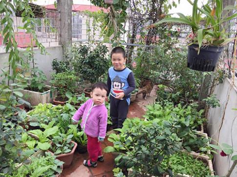 Ông bố 2 con biến sân thượng thành vườn rau, vườn hoa ngợp mắt