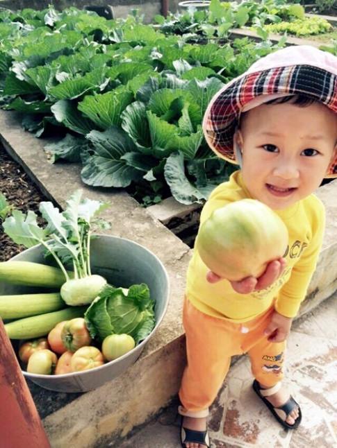 Vườn rau sân thượng 170m2 chen chúc rau, hoa, quả rực rỡ của mẹ Việt