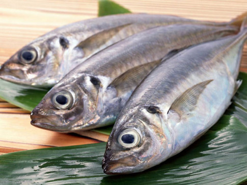 Bộ phận nào của cá dễ bị nhiễm độc nhất?