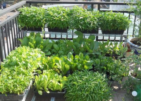Tập trồng rau tại nhà như chuyên gia (P1)