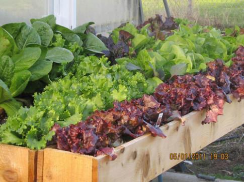 Tập trồng rau tại nhà như chuyên gia (P2)