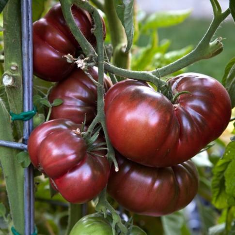 """Những giống cà chua lạ mắt nhìn đã mê, ăn thấy """"phê"""""""