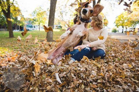 Ở nơi ấy, có tình yêu ngọt ngào của những chú chó dành cho chủ của mình