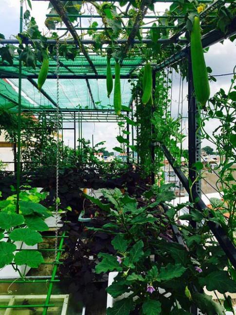 Thích mê những vườn rau sân thượng của sao Việt dù bận rộn trăm bề