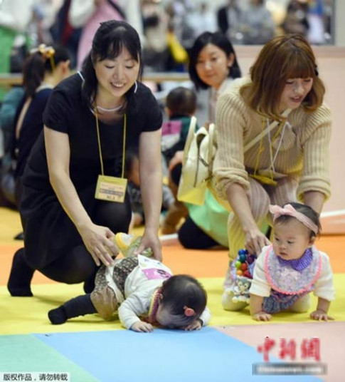 Thú vị cuộc thi bò dành cho trẻ sơ sinh ở Nhật