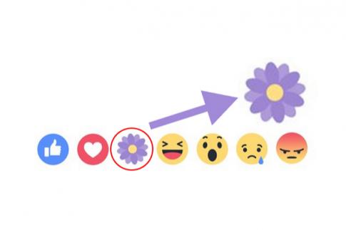 Bạn đã biết cách thả biểu tượng máy bay trên Facebook chưa?